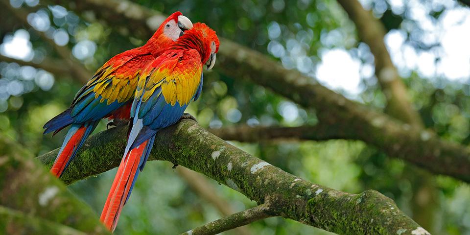 Farverige papegøjer i Walsrode fuglepark.