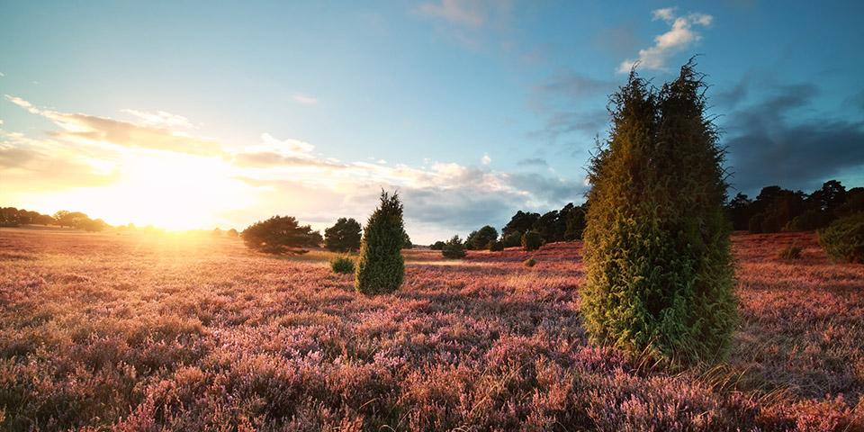 Smukke farver over Lüneburger Heide.